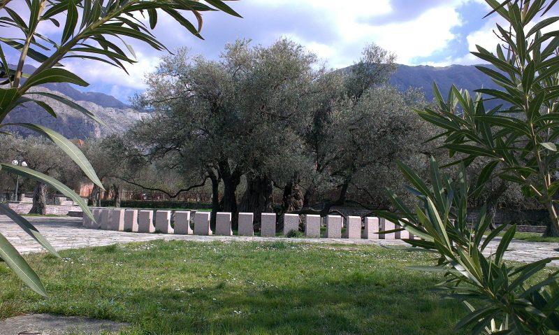Old_olive